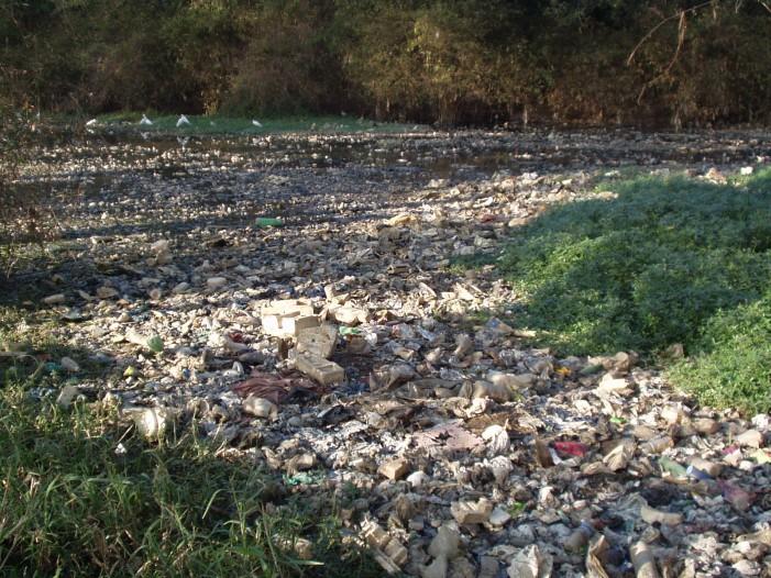 Poluarea mediului și … sănătatea umană
