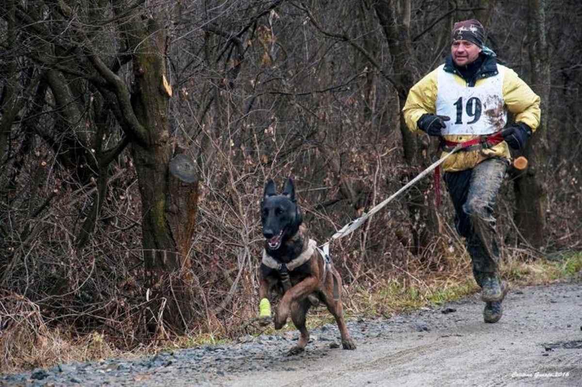 Erik, unul dintre cei mai valoroși câini de salvare din România se alătură Salvamont Neamț