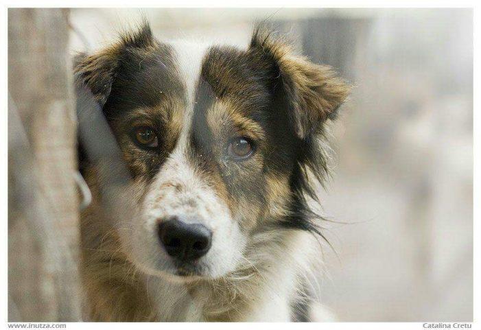 Piatra-Neamț: În acest week-end, Târg de adopții a câinilor fără stăpân