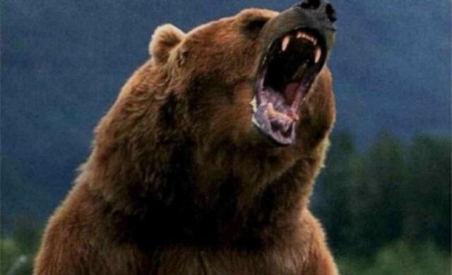 Ursul care a atacat un om la Tașca poate fi omorât